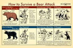 Best bushcraft skills that all survival lovers will certainly want to learn today. This is essentials for wilderness survival and will certainly save your life. Survival Life Hacks, Survival Food, Camping Survival, Outdoor Survival, Survival Prepping, Survival Skills, Survival Quotes, Survival Weapons, Survival Supplies