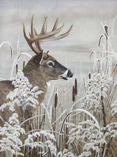 "Original x oil painting of a Whitetail Buck. Title: ""Winters Magical Moment"" by Johanna Lerwick Wildlife/Nature Artist. Nature Hunt, Original Art, Original Paintings, Nature Artists, Whitetail Bucks, Oh Deer, Wildlife Nature, Realism Art, Buy Art"