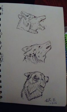 Some wolf practice I did today. I think flowers are next! 1-7-16 Kat Bogue
