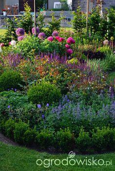 Ogrodowa przygoda Łukasza :) - strona 880 - Forum ogrodnicze - Ogrodowisko