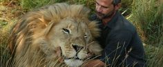 """they miss spelled Vayetse's name PHOTO: Kevin Richardson, popularly known as the """"lion whisperer"""", interacts with one of his lions while out for a walk in the Dinokeng Game Reserve, near Pretoria, South Africa, March 15, 2017."""
