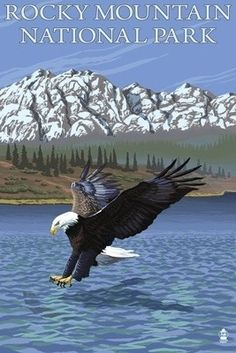 Rocky Mountain National Park, CO - Eagle Fishing - Lantern Press Poster Waterton National Park, Rainier National Park, Old Poster, Canvas Poster, National Park Posters, National Parks, Eagle Art, Lake George, Stock Art