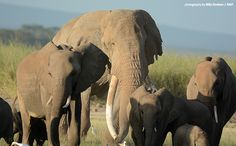 Big Tim and the State of His Species | African Wildlife Foundation