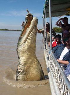 Brutus, el cocodrilo 5,5 metros.