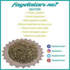 Zahterin faydaları nelerdir #zahter Food For Immune System, Vitamins For Immune System, Alternative Health, Alternative Medicine, Weight Loss Meal Plan, Fast Weight Loss, Cycling Diet, Whole 30 Meal Plan, Anti Inflammatory Recipes
