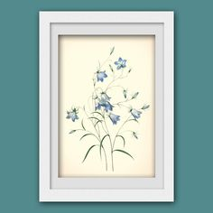 botanical print, blue flower print 128, produced from a vintage illustration upcycled from a bookplate.