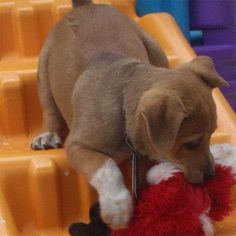 Puppy and the toy.