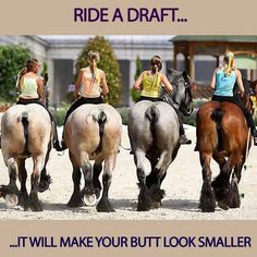 Ride a draft horse !!!