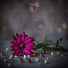 Vintage Flowers Wallpaper, Wallpaper Nature Flowers, Beautiful Flowers Wallpapers, Flower Wallpaper, Beautiful Nature Scenes, Beautiful Flowers Garden, Pretty Flowers, Beautiful Gardens, Dark Pictures