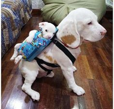 OK, now this is about the cutest thing I've seen for days!!! 2 Traveling Dogs