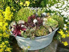 Idee Zinkwanne - All For Garden Vegetable Planters, Container Gardening Vegetables, Succulents In Containers, Vegetable Garden Design, Vegetable Gardening, Herb Garden Pallet, Pallets Garden, Balcony Plants, Balcony Garden