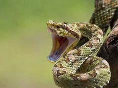 Snake??  That's interesting...