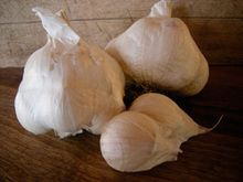Kettle River Giant Organic Garlic