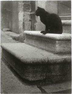 Le Chat noir byBrassaï, 1945