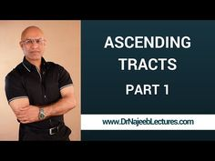 Spinothalamic Tract - Ascending Tracts - Part 1/4 - YouTube