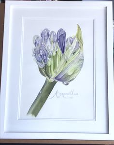 Excited to share this item from my #etsy shop: Agapanthus #originalwatercolour #watercolor #interior #art Agapanthus, Another One, See Photo, Watercolor Paper, Art For Sale, Etsy Shop, Interior, Flowers, Painting