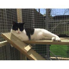 Cat Climbing Shelf Cat Perch and Brackets