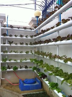 love this! great way to maximize space - source- Hydroponics in Cambodia #hydroponics