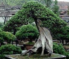Risultati immagini per gli alberi più belli del mondo