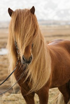 Amazing horse with a beautiful mane blowing in the wind. I want to ride this horse!