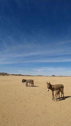 Desert Donkeys by More Altitude, via Flickr