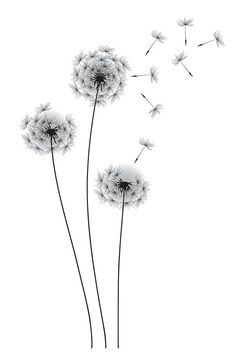 Gallery For > Dandelion Drawing Black And White: