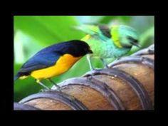 fauna , flora , gastronomia e turismos em ubatuba