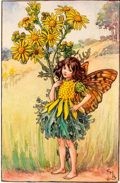 """Vintage print 'The Ragwort Fairy' by Cicely Mary Barker from """"The Book of the Flower Fairies""""; Poem and Pictures by Cicely Mary Barker, Published by Blackie & Son Limited, London [Flower Fairies - Summer] Cicely Mary Barker, Flower Fairies Books, Fairy Pictures, Vintage Fairies, Beautiful Fairies, Fantasy Illustration, Art Abstrait, Fairy Art, Faeries"""