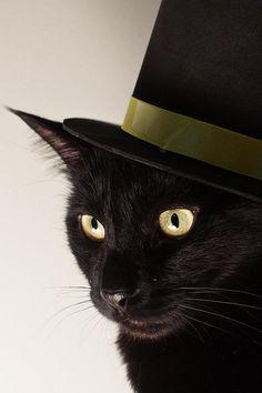 . Beautiful Black Cats ♥