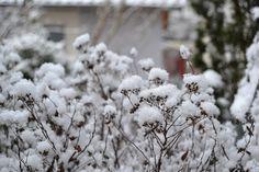 130208_Schnee