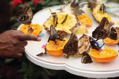 Easy ways to attract butterflies to your yard.