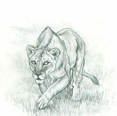 jagende löwin zeichnen
