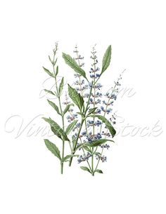 Blue Flowers Clip Art, Floral Botanical Vintage Print,  Blue Flower Clipart Digital Image for Print, Artwork, Collage INSTANT DOWNLOAD -1965