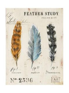 Nature's Feathers Art Print by Angela Staehling at Art.com