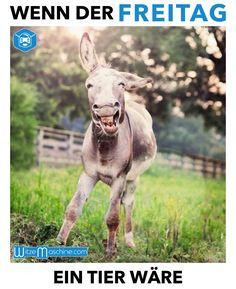 Wenn der Freitag ein Tier wäre - lustiger Esel - Endlich Wochenende