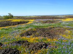 Table Mountain Ecological Reserve - hiking near oroville