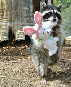 """Dis my bunny wabbit. It makes me feel better when I am sad, and you look sad so you can borrow it if you want."""