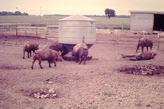 Don's farm in Ash Grove