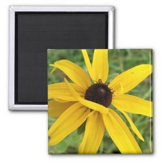 This is a picture of a Black Eyed Susan blossom. Taken on a later summer day in Virginia. The warm breeze blowing the flowers in the field around made for difficult time keeping the blossom in focus. Multiple sizes are available. Great for home or office decor. Also a great gift idea for holidays, birthdays, anniversary, and house warming. Add your own style to it by adding text.