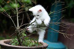 Baby kitten climbing