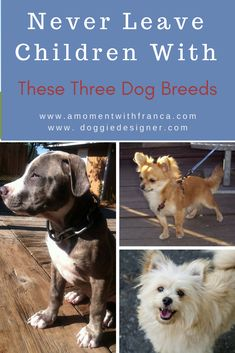 Never Leave Children With These Three Dog Breeds Becoming Mom, Welcome To The Group, Starting School, Mummy Bloggers, 1 Year Olds, Working Moms, Family Kids, Cool Kids, Dog Breeds