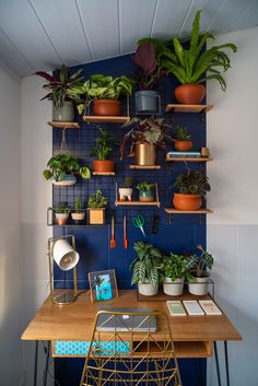 Inspiration Types of Home Ornamental Plants That Can Cool the Eyes - Homemidi Living Room Small, Living Room Decor, Jungle Bedroom, Decor Inspiration, Diy Home Decor Bedroom, Aesthetic Rooms, Types Of Houses, Plant Decor, Plant Wall