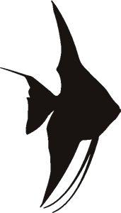 tropical fish, stencil?