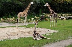 Der Zoo in Leipzig zeigt sich als echter Besuchermagnet