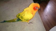Sunny Parrot, Sunnies, Bird, Animals, Parrot Bird, Animales, Sunglasses, Animaux, Shades