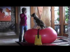 Getting Started: Canine Fitness & Conditioning Using Balance Discs