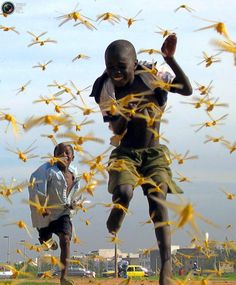Senegalese children run as locusts spread in the capital Dakar September 1, 2004. Only a military-style operation with bases across West Africa can stop the worst locust invasion for 15 years, Senegal's President Abdoulaye Wade said on Tuesday as the insects swept into his capital. The United Nations Food and Agriculture Organisation (FAO) warned last week that the locust swarms infesting countries from Mauritania to Chad could develop into a full-scale plague without additional foreign aid.