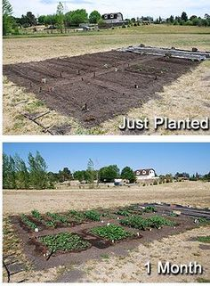 How To Maintain A Vegetable Garden This is the best link ever.  All gardeners will love this one.  It's straight forward with related links.  Love it.