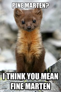 The Pine Marten. in article on buzzfeed ie JK Rowling based patronus loosely on this elusive creature. It even has its own meme.