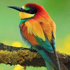 Synchronicities of colour https://plus.google.com/+PeterHatherley/posts/1LGU6VBc7Su